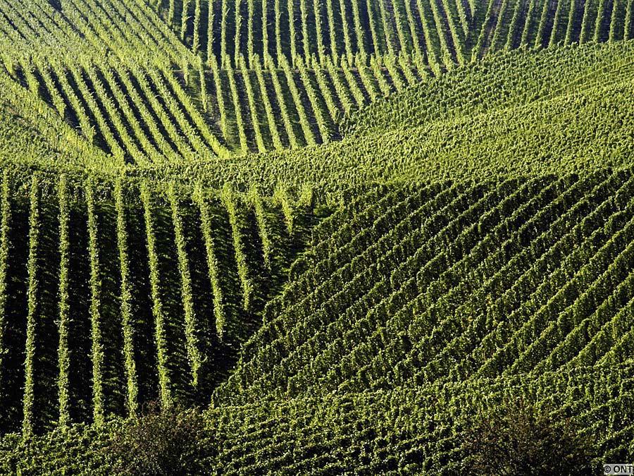 vinice, Lucembursko