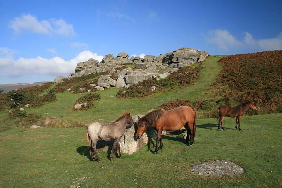 NP Dartmoor, Anglie